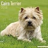 Cairn Terrier Calendar - Dog Breed Calendars - 2017 - 2018 wall Calendars - 16 Month by Avonside