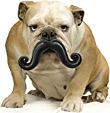Humunga Stache Rubber Dog comedy toy