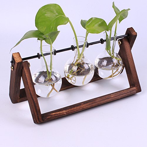 Siyaglass Glass Planter Bulb Vase with archaistic Wooden Stand and Metal Swivel Holder for Hydroponics Plants Home Garden Wedding Decor (3 bulb vase) by Siyaglass