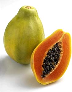 David's Garden Seeds Fruit Papaya Solo Sunrise Improved 8837 (Red) 15 Non-GMO, Open Pollinated Seeds