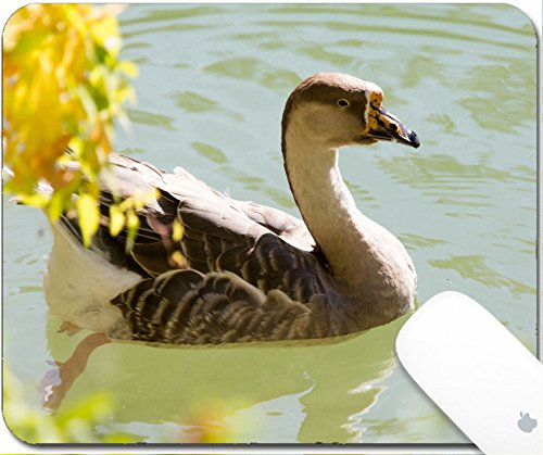 Luxlady Gaming Mousepad 9.25in X 7.25in IMAGE: 34501646 duck swims in the (Large Landing Duck)