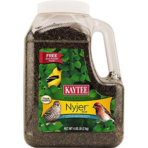 Kaytee 100033969 Nyjer Birdseed 4.9 lbs