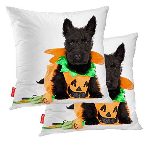 Aberdeen Halloween Contacts - BaoNews Halloween Pillow Covers, Scottish Terrier