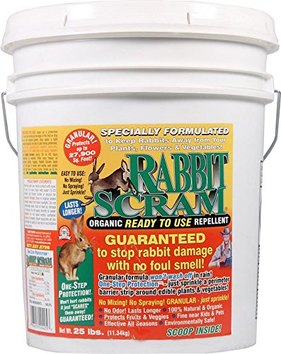 Scram Rabbit Repellent (Enviro Pro 11025 Rabbit Scram Repellent Granular White Pail, 25 Pounds - 100052379)
