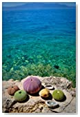 Sea Urchins on a Rock at the Coast Vacation Journal: 150 Page Lined Notebook/Diary