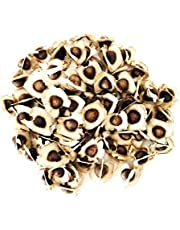 250 Sementes de Moringa Oleifera Para Plantio e Mudas