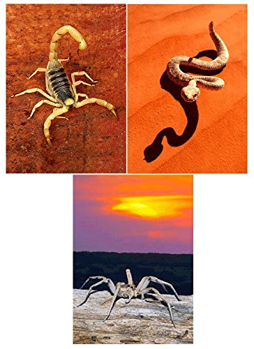 3 Different Desert Creatures - Rattlesnake, Wolf Spider and Scorpion - 3D Lenticular Postcard Greeting Cards (Spider Postcard)
