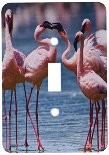 3dRose lsp_206811_1 Lesser flamingos competing for a female, Lake Nakuru NP, Kenya Single Toggle Switch