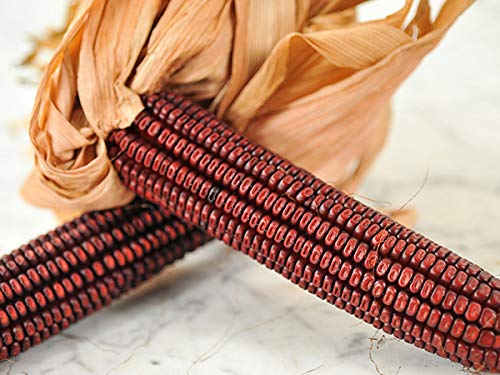 - David's Garden Seeds Corn Dent Bloody Butcher FG6674 (Red) 100 Non-GMO, Heirloom Seeds