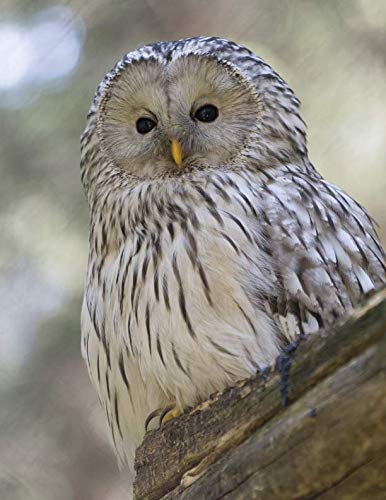 (Notebook: Owl wild animals bird of prey wildfowl fowl owls preying wildlife animal birds nature natural)