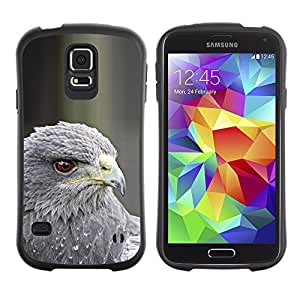 Paccase / Suave TPU GEL Caso Carcasa de Protección Funda para - hawk grey prey bird beak eye feather - Samsung Galaxy S5 SM-G900