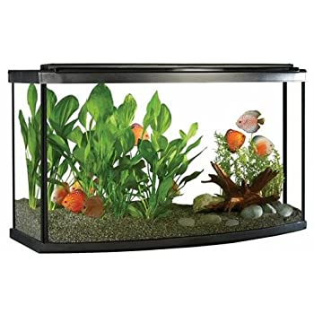 best fish tank for a goldfish