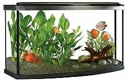 Fluval 45-gallon bow front aquarium