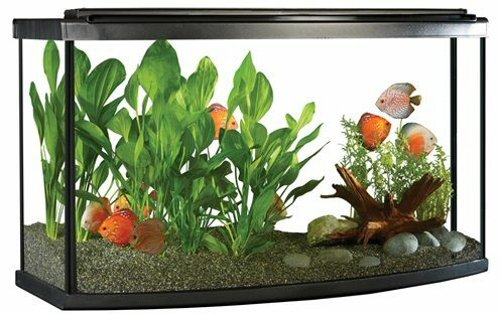 Fluval Premium Bow Front Aquarium Kit w/ LED, 45 Gallon (170L) by Fluval