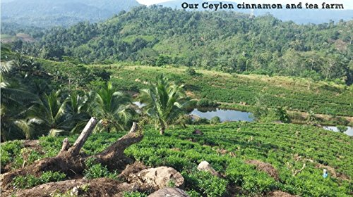 Organic Ceylon Cinnamon Powder - Family Owned Since 1935 - 1 Lb. in a Handy Re-sealable Pouch by Diyesta (Image #5)