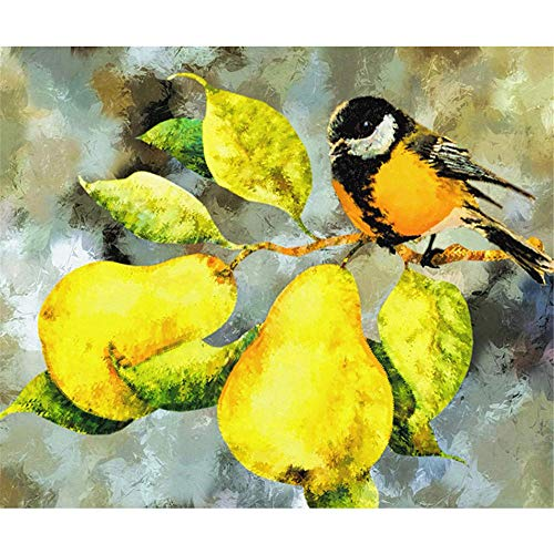 - DIY Oil Paint by Number Kit for Adults Beginner 16x20 Inch - Bird on Pear Tree,Drawing with Brushes Christmas Decor Decorations Gifts (Framed)
