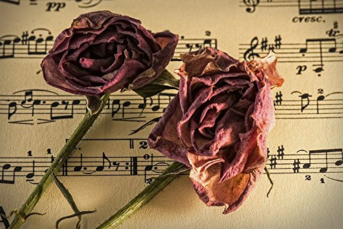 Home Comforts Laminated Poster Carnation Romance Manuscript Sheet Music Old Time Poster 24x16 Adhesive ()