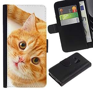 Orange American Shorthair Cat - la tarjeta de Crédito Slots PU Funda de cuero Monedero caso cubierta de piel Samsung Galaxy S3 MINI 8190