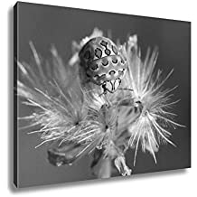 Ashley Canvas A Beautiful White And Brown Picasso Bug From West Africa, Wall Art Home Decor, Ready to Hang, Black/White, 16x20, AG6043411