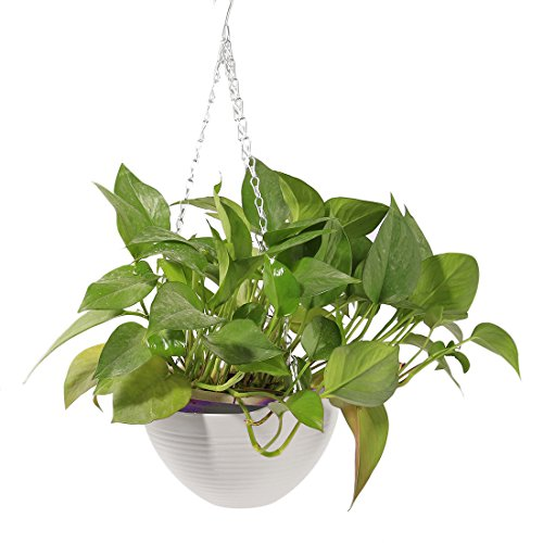 Hanging Flower Plant Pot,Hmane Chain Plastic Basket Planter Holder Patio Home Decoration - (Plastic Flower Basket)