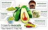 AvoSeedo Avocado Tree Growing Kit – Practical