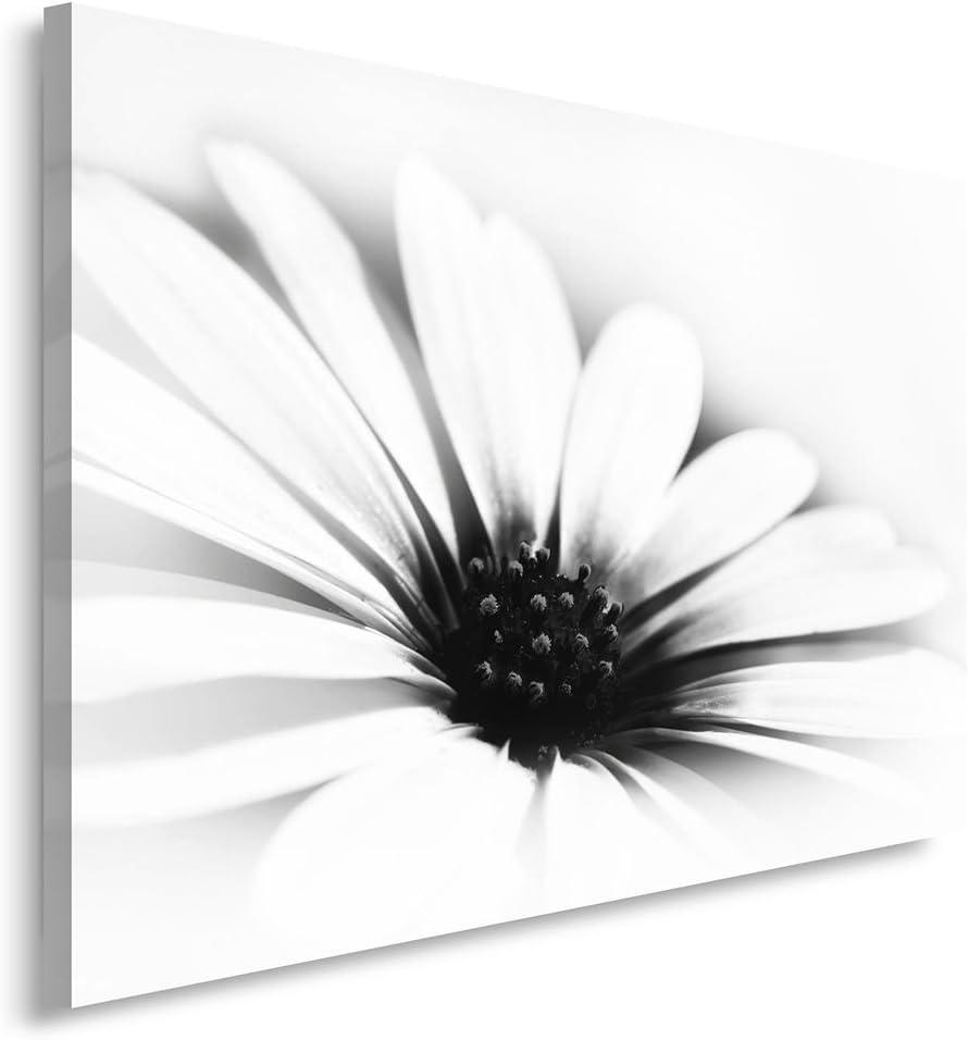 Feeby. Cuadro en Lienzo - 1 Parte - 80x120 cm, Imagen impresión Pintura decoración Cuadros de una Pieza, Margarita, Flor, Naturaleza, Blanco Y Negro