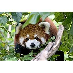 TSlook Door Mat Funny Cute Red Panda Welcome Home Rug 30 x18