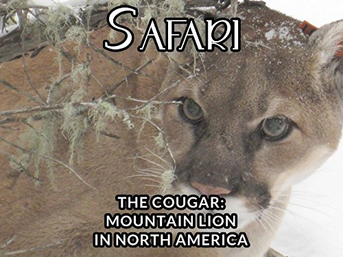 THE COUGAR - MOUNTAIN LION IN NORTH AMERICA