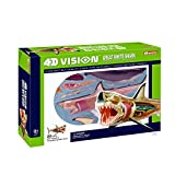 John N. Hansen Tedco 4D Vision Great White Shark Anatomy Model