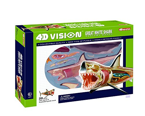 4D Vision Great White Shark Anatomy Model