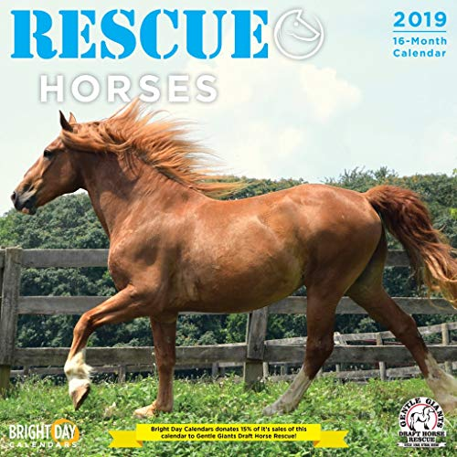 Rescue Horses 2019 16 Month Wall Calendar 12 x 12 Inches