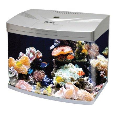 Classica paradom 58L negro lazo frontal Kit de acuario pecera Tropical Marine con libre calentador: Amazon.es: Productos para mascotas