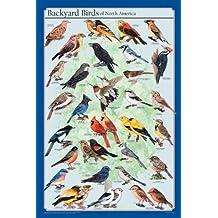 Frey Scientific póster de aves de América del Norte, 36 pulgadas de largo x 24 pulgadas de ancho