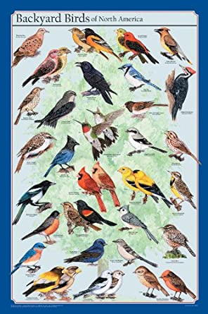 Frey Scientific Backyard Birds Of North America Poster, 36u0026quot; ...