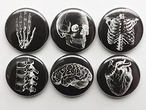 white on black Anatomy refrigerator Magnets 1 inch set of 6 skull brain anatomical heart human body medical gift