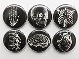 white on black Anatomy refrigerator Magnets 1 inch set of 6 skull brain anatomical heart human body medical gift