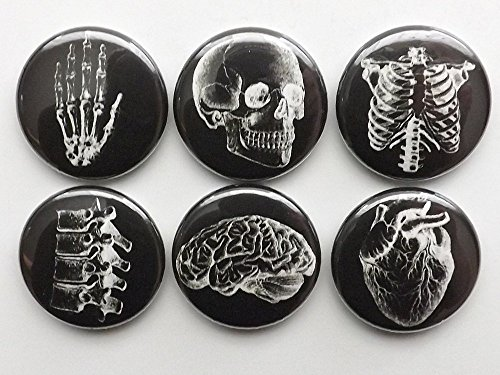 white on black Anatomy refrigerator Magnets 1 inch set of 6 skull brain anatomical heart human body medical gift (Halloween College Party Ideas)