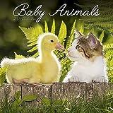 Cute Animal Calendar - Cute Animals Wall Calendar - Baby Animals Calendar - Calendars 2019 - 2020 Wall Calendars - Baby Animals 16 Month Wall Calendar by Avonside (Multilingual Edition)