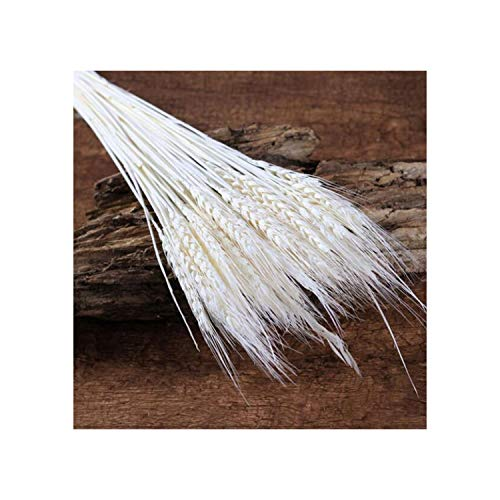huayun Natural Dried Flower Wheat Ears Bouquet for Wedding Party Decoration DIY Craft Home Decor Scrapbook - Wheat 4 Light Chandelier