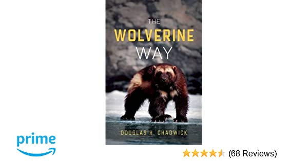 The Wolverine Way Douglas H Chadwick 9780980122749 Amazon Books