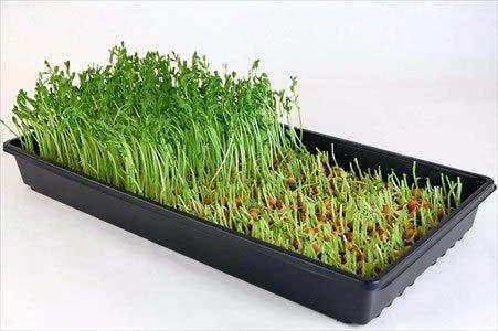 Sunflower greens microgreen kits