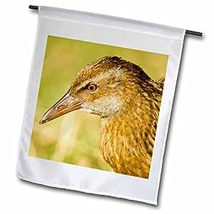 Danita Delimont - Birds - New Zealand, South Island, Marlborough, Weka bird-AU02 FNO0310 - Fredrik Norrsell - 18 x 27 inch Garden Flag (fl_70589_2)