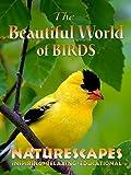 The Beautiful World of Birds