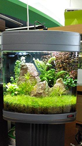 Sera 31106 Mondi Biotop Nano LED Cube 60 un 60 L de Agua Dulce Acuario Completo con iluminación LED y Filtración.: Amazon.es: Productos para mascotas