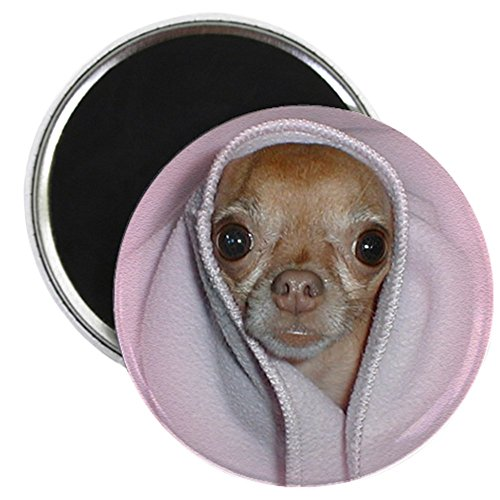 CafePress - Chihuahua Magnet - 2.25