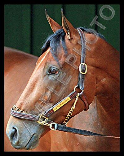 American Pharoah Closeup Triple Crown Champion Horse Racing 8X10 Photo #2 ()