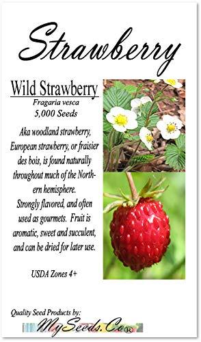 Big Pack - Wild Strawberry, Fragaria vesca Seeds - Non-GMO Seeds (Strawberry, Wild (5,000 Seeds)) (Wild Strawberries Seeds)