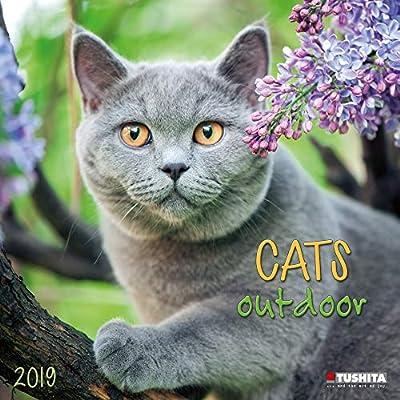 Calendario 2019 gato naturaleza – gato gouttiere – gato jardín (TS) + incluye un – Agenda de bolsillo 2019: Amazon.es: Oficina y papelería