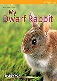 Dwarf Rabbit (My Pet)