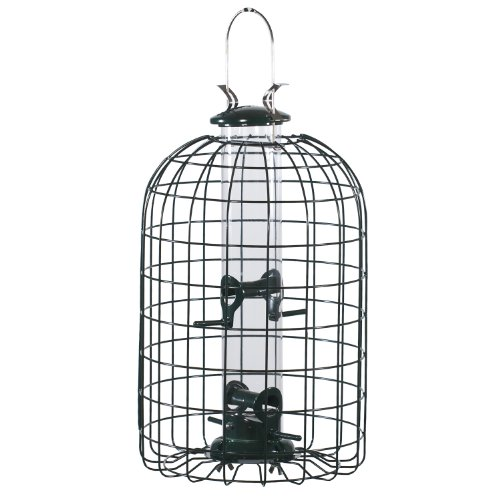 Types Of Backyard Birds (Audubon Squirrel Proof Caged Tube Type Bird Feeder Model NATUBE3)